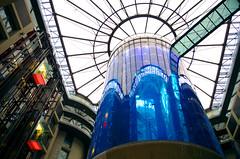 Aquarium (Atreides59) Tags: aquarium water eau blue bleu poissons poisson fish ciel sky nuages clouds berlin germany deutschland allemagne urban urbain pentax k30 k 30 pentaxart atreides atreides59 cedriclafrance