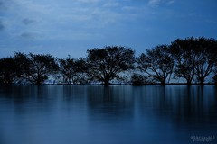 静かな満月 (atacamaki) Tags: blue lake tree nature water japan night fullmoon fujifilm 1855mm kasumigaura ibaraki xf 夜 満月 帰り道 湖面 f284 霞ヶ浦 xt2 jpeg撮って出し atacamaki 対岸は行方市 day life
