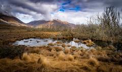 Canterbury High Country swamp. NZ (ndoake) Tags: