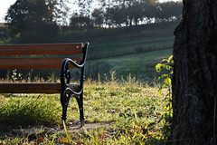 Bench in the Sun 2 (DPozega) Tags: bench sunlight morning sunrise light green outdoor outside countryside depthoffield tree field composition landscape grass nikon d3300 nature croatia