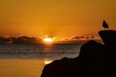 Sun Sentinel (Flipped Out) Tags: chicago edgewater hollywoodbeach thorndaleavebeach lakemichigan sunrise