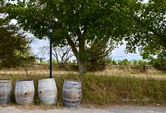Aug 31 - almost harvest time (Basildon Kitchens) Tags: princeedwardcounty summer harvest winery thegrangewinery barrels