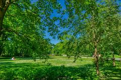 Vilna - Vilnius (Carlos M. M.) Tags: lituania lithuania vilna vilnius park parque trees hdr sony sonyalpha6000 travel
