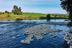 River Foam (scottprice16) Tags: england lancashire riverribble ribblevalley clitheroe brungerleypark water foam natural phenomenon dissolvedorganiccompounds turbulence surfactant soap mixing outdoors nature trees hills fells cows waddingtonfell sony sonyrx100m3 2019 autumn september sunshine sky cloud