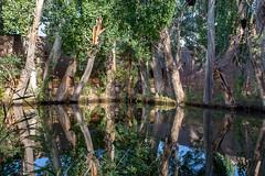 Reflections near Afaq Khoja Mausoleum (RiserDog) Tags: reflections pond trees afaqkhojamausoleum kashgar xinjiang silkroad china asia