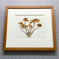 Original mushroom watercolor by L Robbins - presented with 8 ply mat, TruVue Conservation Clear glass, and a solid cherry frame sourced and milled in Pennsylvania. (Custom Picture Framer LLC) Tags: 19038 8ply archivalframing art customframing custompictureframer design fineart frame fungi glenside glensidepa lrobbins madeinpa madeinpennsylvania mushrooms originalart pennsylvania philadelphia phillyframing shopglenside shrooms solidcherry truevue truvue watercolor