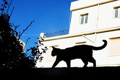 Crete Cat (kirstiecat) Tags: γάτα cat chat gato katze feline kitty silhouette blackcat streetcat architecture canon europe greece crete caturday