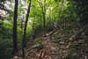 Stairway to... (Sarah Rausch) Tags: sony woods forest tennessee hiking rokinon 14mm 28 trail rokinon14mm28 wide wideangle trees