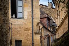 Peeping Tom, Sarlat (Bob Radlinski) Tags: dordogne europe france nouvelleaquitaine périgord sarlatlacanéda cat travel window sny01948