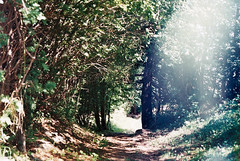 006 (alicerobijns) Tags: dappled leaves path mountains forest trees fujifilm fujifilm200 film analogue analog canon canonae1 photography switzerland