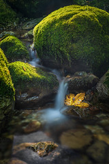 Just me myself and leaf (BorRojnik) Tags: cascade water waterfall green peace tranquility
