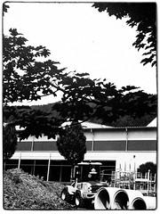 Agfa Ysolette Medium Format 8 (John Teulon Ladd) Tags: formapanclassic100isobw wwwmeinfilmlabde mittelformat analog 120film agfaysolette bw film mediumformat monochrome moyenformat schwarzweiss ysolette agfa meinfilmlab