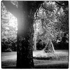 Agfa Ysolette Medium Format 3 (John Teulon Ladd) Tags: formapanclassic100isobw wwwmeinfilmlabde mittelformat analog 120film agfaysolette bw film mediumformat monochrome moyenformat schwarzweiss ysolette agfa meinfilmlab