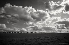 Stralsund / Devin - Bäume, Wolken (tom-schulz) Tags: ricoh grii conversionlenswide monochrom bw sw stralsund thomasschulz feld baumreihe bäume allee himmel wolken