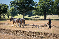 2 horsepower (Jez22) Tags: jeremysage photography copyright heavyhorses horsepower ploughing plough rural kent wkpma field agriculture working trees furrow horsedrawn madge dolly