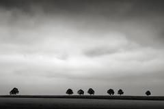 Sieben Bäume (StefanB) Tags: germany deutschland geotag ries schwaben 2019 em5 1235mm tree bäume treescape