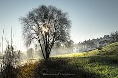 Lumière sur La Patache (Bertrand Thiéfaine) Tags: village loire maineetloire champtoceaux porthamelin lapatache pêcheurs arbre leverdujour matin brume soleil
