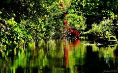 ~~ Le petit Ru coloré ~~ (Joélisa) Tags: septembre2019 ru ruisseau reflets sousbois eau vitesselente