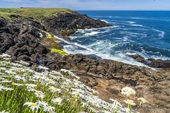 Rocky Creek State Scenic Viewpoint-Oregon (doveoggi) Tags: oregon coast ocean flowers rock surf 1002