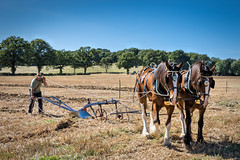 Sid and sam (Jez22) Tags: photography jeremysage trees horses field rural kent traditional farming bluesky agriculture heavy plough agricultural horsepower ploughman ploughing furrow wkpma