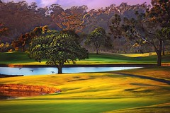 Summertime Can't Last Forever (Christina's World :) Tags: landscape light leaves birds dramatic ducks textures trees topaz sunset sandiego scenic summer sunlight dusk pond fairbanksranch ranchosantafe yellow gold grasses green grass 1296 california socalifornia painterly