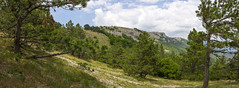panoramic view of the Caucasus Mountains in summer day (a_d_andreev) Tags: park travel blue summer sky panorama mountain tree green tourism nature beauty grass rock pine forest landscape scenery view meadow valley alp cliff cloud flower leaves stone outdoors climb bright hiking hill grow scenic peak ridge growth health national environment spruce height wood wild top sunny surface summit wilderness