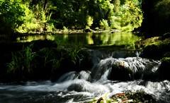 ~~ NATURE~~ (Joélisa) Tags: septembre2019 ru ruisseau reflets sousbois eau vitesselente