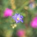 Top Flower