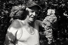 Carlino e la gallina (Mango982) Tags: carlino paisan gallina farm fattoria agricoltura uva agricolture contadino farmer hen wine grapes portrait anziano elderly work lavoro ritratto man uomo nonno
