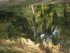 reflections in a pond (VERUSHKA4) Tags: canon europe russia moscow ville city water pond eau reflection tree nature trunk wetreflections birch leaves verdure shore land september autumn drygrass grass park kuskovo green blue sky