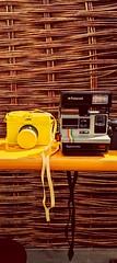 buttercup 635 (gpshead) Tags: blossom bubbles buttercup f yellow polaroid supercolor 635 diana wicker straps cameras