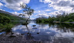 The Lone Tree - Llyn Padarn (joanjbberry) Tags: thelonetree water stones clouds tree trees llanberis northwales wales village mountains mountain gwynedd snowdonia snowdoniamountains lakellynpadarn fujifilm fujifilmxt3 xt3 northwestwales lake