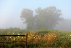 In the Morning Mist (Patricia Henschen) Tags: sanluisvalley alamosa colorado alamosanationalwildliferefuge wildlife refuge sky clouds mountain mountains rural fog mist morning wildflowers fence sunflowers wetland