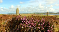 Pink heather and standing stones. (Vicky Martí) Tags: scotland outdoor outside countryside wildlife standing stones visitorkney orkney brodgar loch september summer clouds