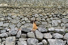 Alert (LeeDylanLeeDyl) Tags: machu picchu peru peruvian llama alpaca vicuna d3300 35mm 18 nikon nikkor animal animals candid rock rocks walls rice terrace terraces