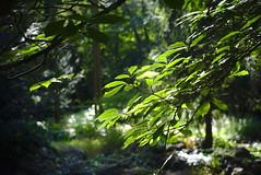 The play of lights (mmichalec) Tags: nature natura park polishnature poland gdańsk tricity lights sunlight światło trees liście drzewa plants roślny fujifilm