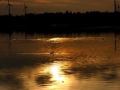golden hour (BrigitteE1) Tags: goldenhour sunset bird sky lake water night light sun yellow orange black clouds nature outside ciel naturaleza colours seascape quote