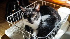 Put Cat Away When Dry (DDM Imaging) Tags: cat pets pet kitten family dishes camera sony a7mii a7m2 fur fun animal animals feline home farm country countrylife