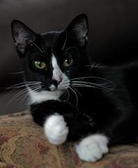 (C. Neil Scott) Tags: columbiasc southcarolina barbarella cat kitten gato feline