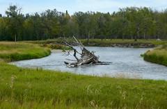 Hull's  Wood to Mallard Point Urban Hike, Calgary - 5 (benlarhome) Tags: calgary alberta canada fishcreek fishcreekpark hike urban
