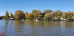 Cruising along the Vaal River (Rckr88) Tags: vanderbijlpark southafrica south africa cruising along vaal river cruisingalongthevaalriver rivers water vaalriver tree trees nature
