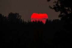 Sunset (Markus Branse) Tags: sunset sun sonne rood red rougue roughe rot sonnig abend abendstimmung herbst himmel sky german germany deutschland deutsch niemcy münsterland darfeld rosendahl rosendahldarfeld stern star horizont