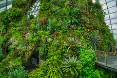 Cloud Forest conservatory in the Gardens by the Bay in Singapore (UweBKK (α 77 on )) Tags: gardensbythebay garden bay conservatory singapore southeast asia sony alpha 77 slt dslr cloudforest cloud forest plant foliage green