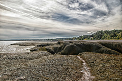 L'invasion de l'herbe marin / Seagrass invasion (Donald Plourde) Tags: beach bay stmartins fundy plage seagrass roches mousse herbe baie rocks