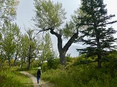 Hull's Wood to Mallard Point Urban Hike, Calgary - 10 (benlarhome) Tags: calgary alberta canada fishcreek fishcreekpark hike urban