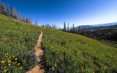 Nebo North Trail (xjblue) Tags: 2019 mtnebo utah highpoint hike mountain mountains nature outdoor wasatch wasatchmountains trail