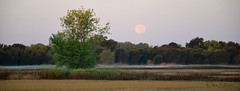 Moonset 01 (Dave Skinner Photography) Tags: cosumnes river preserve sunrise color geese ibis birder harvest moon full