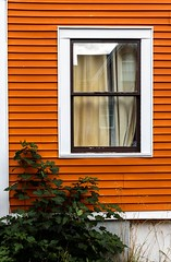 Window (Karen_Chappell) Tags: window house trim wood wooden paint painted orange brown white reflection tree green city urban downtown home rowhouse jellybeanrow stjohns nfld newfoundland eastcoast avalonpeninsula atlanticcanada canada canonef24105mmf4lisusm curtains clapboard lines architecture building