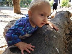 On a log (quinn.anya) Tags: eliza toddler log climbing