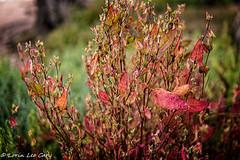 Along the Path 2 (lorinleecary) Tags: foliage morrobaystatepark morrobay